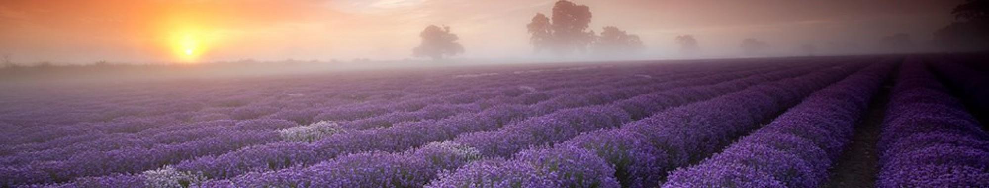 lavenderandlovedotcom